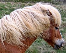 pferdenamen mit bedeutung